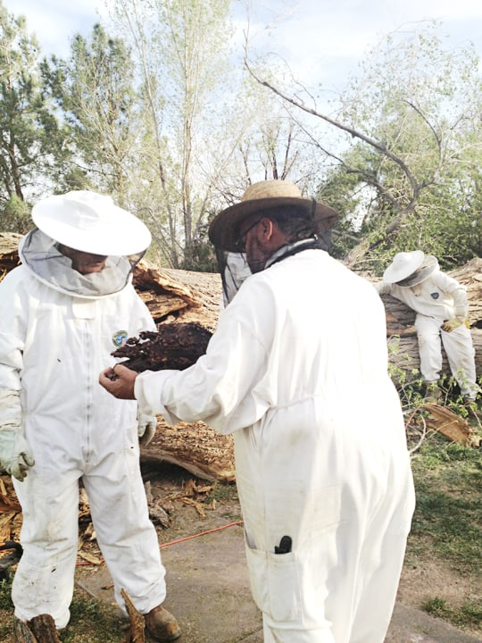 What I've Learned About Beginning Beekeeping - Growth