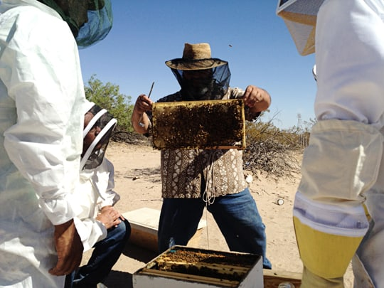 What I've Learned About Beginning Beekeeping - Tribe