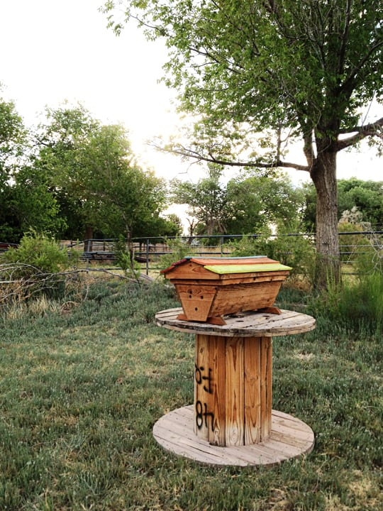 What I've Learned About Beginning Beekeeping - Knowledge