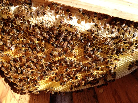 What I've Learned About Beginning Beekeeping - Scared