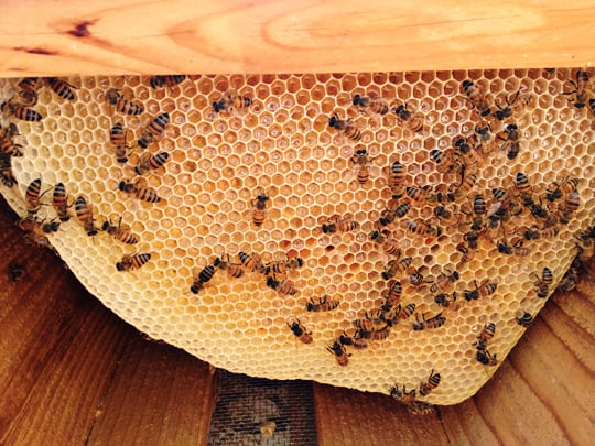 What I've Learned About Beginning Beekeeping - Amazed