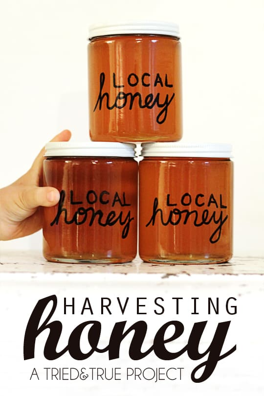 Harvesting Honey on the Cheap - A Tried & True Project