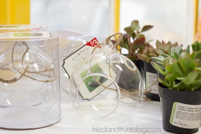 May Day Succulent Bubble - Supplies