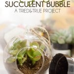 May Day Succulent Bubble