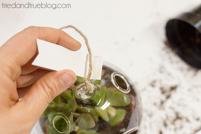 May Day Succulent Bubble - Tag