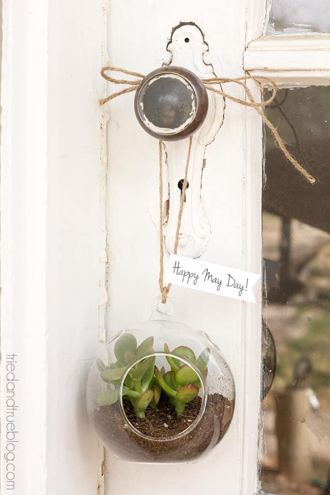 May Day Succulent Bubble - Hang