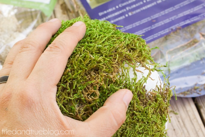 Sweetheart Moss Spheres - Moss