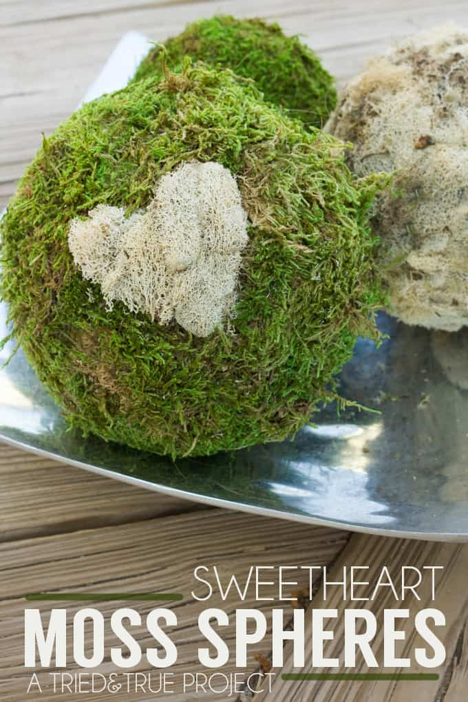 Add a sweet decorative element to your table or mantle with these Sweetheart Moss Spheres!