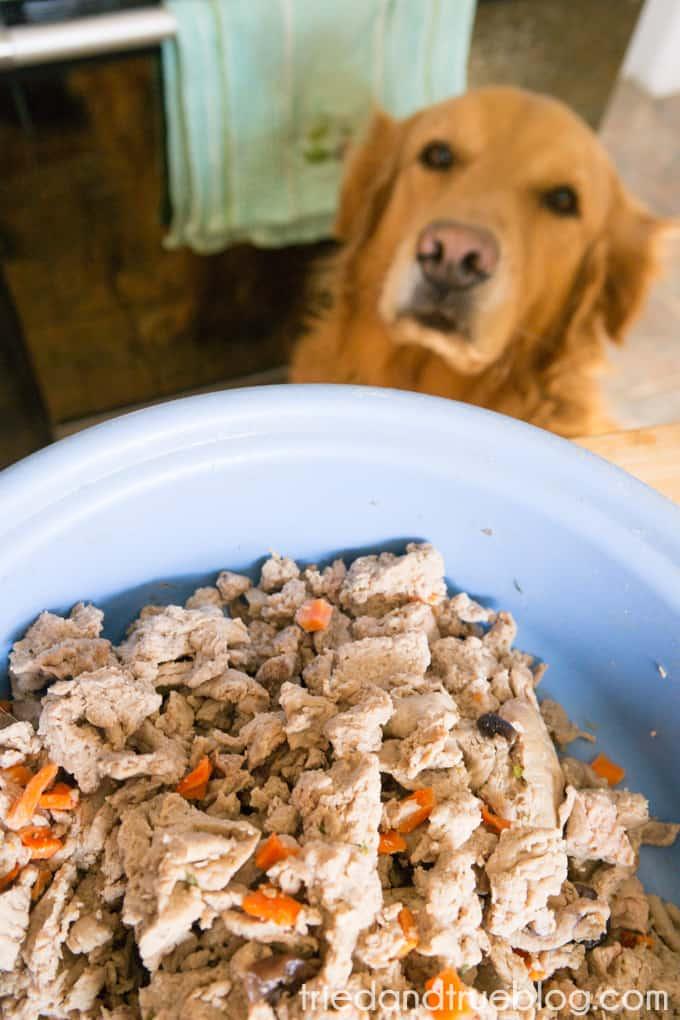 Faux Chalkboard Dog Leash Holder - Hungry